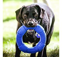 """Black Lab Mix"""" Cooper"""" Formerly Dodger Photographic Print"""