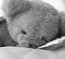 Teddy by Jo  Young