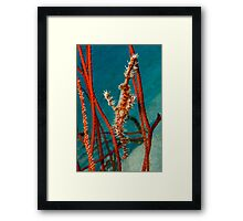 Harlequin Ghost Pipefish, Kimbe Bay, Papua New Guinea Framed Print