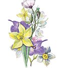 Daffodil and spring flower bouquet in yellow and purple watercolour painting by Sandra O'Connor
