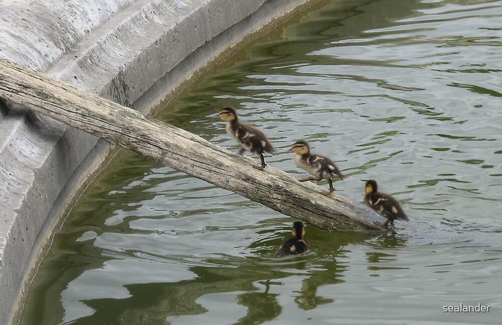 Duck bridge by sealander