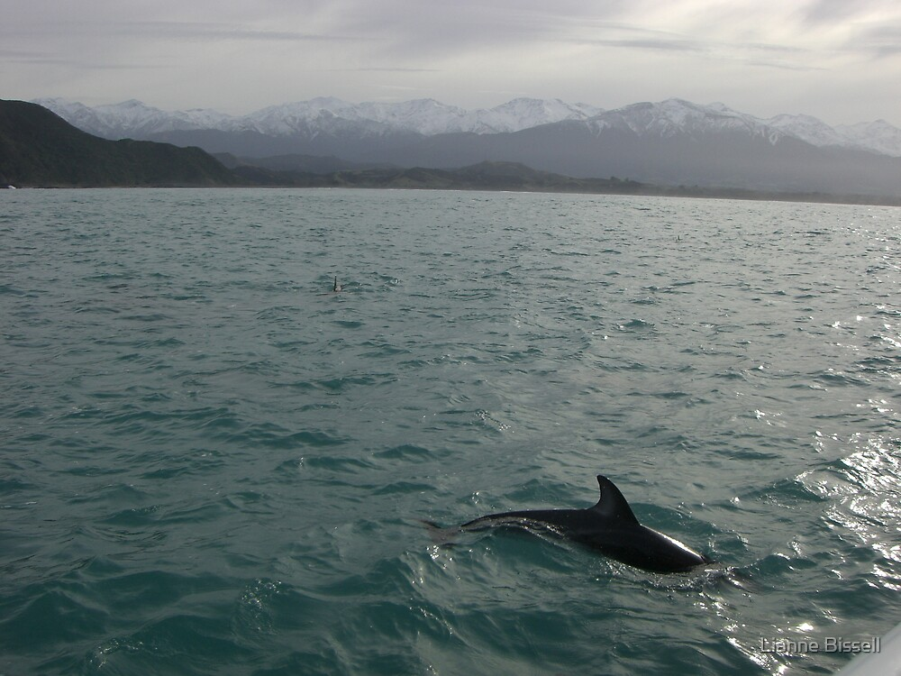 Wild dolphins by Lianne Bissell