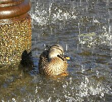 Showered Duck by Lianne Bissell