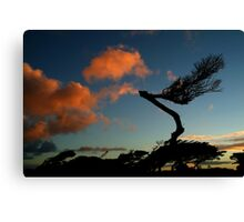 Wind Swept, Torquay,Start of the Great Ocean Road Canvas Print