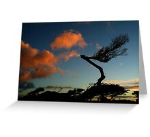 Wind Swept, Torquay,Start of the Great Ocean Road Greeting Card