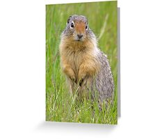 Wary gopher Greeting Card