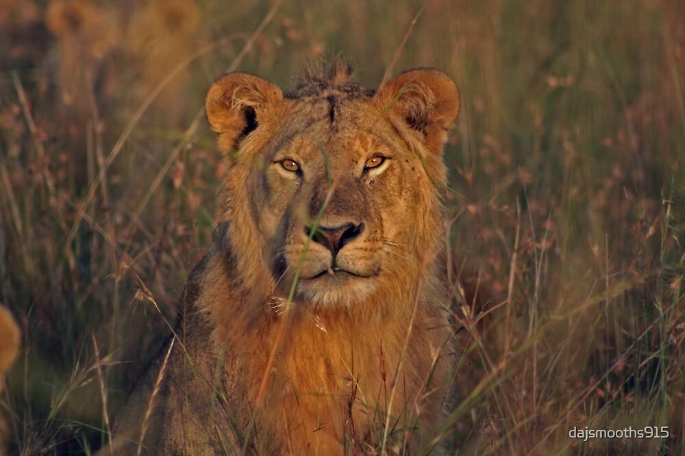 africa safari by dajsmooths915