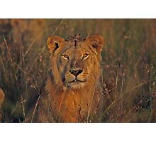 africa safari Photographic Print