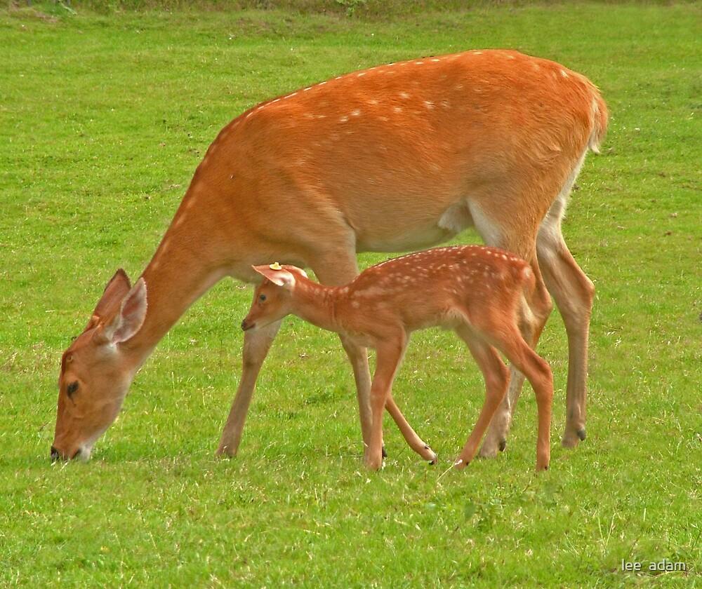 Deers by lee  adam