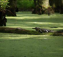 The alligator by BCrittenden