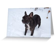 Black French Bulldog Loves To Play In The Snow Greeting Card