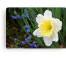 Daffodil with a Hint of Yellow Canvas Print