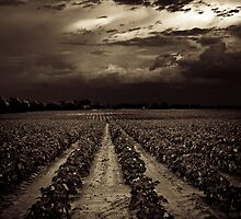 Rows by Christopher Holland