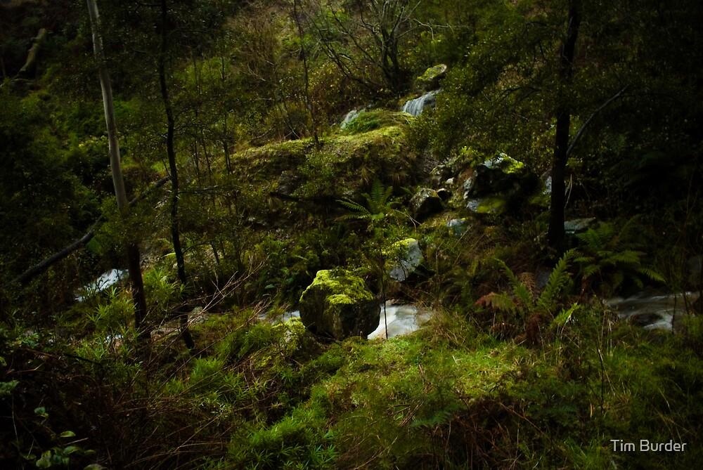 Mossy Rocks 1 by Tim Burder