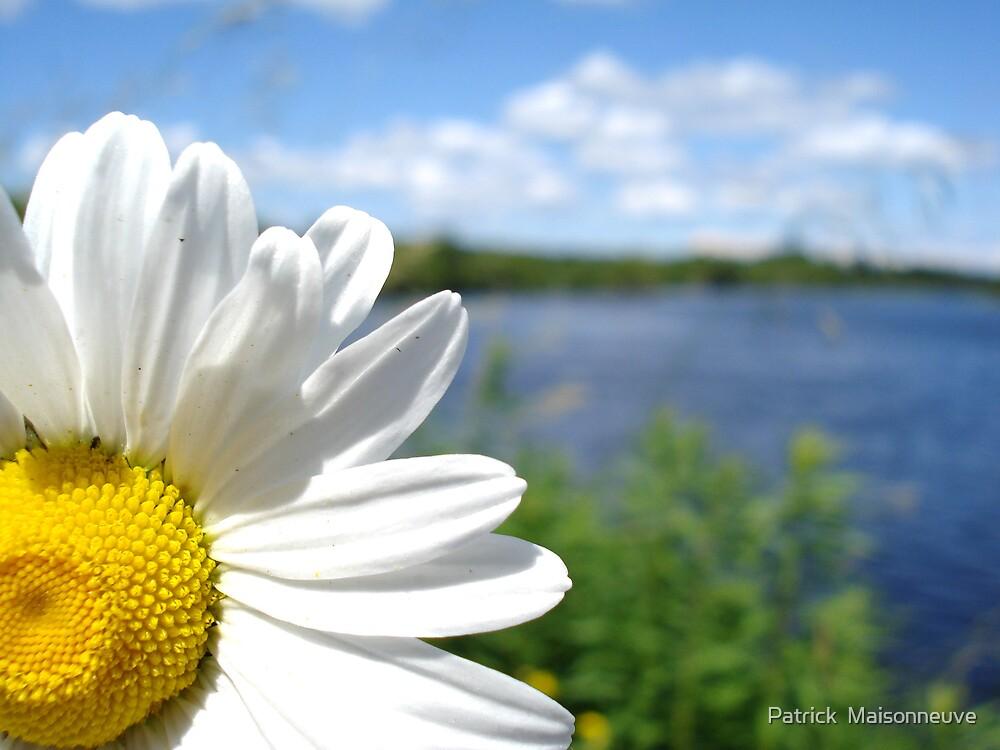 Flower by Patrick  Maisonneuve