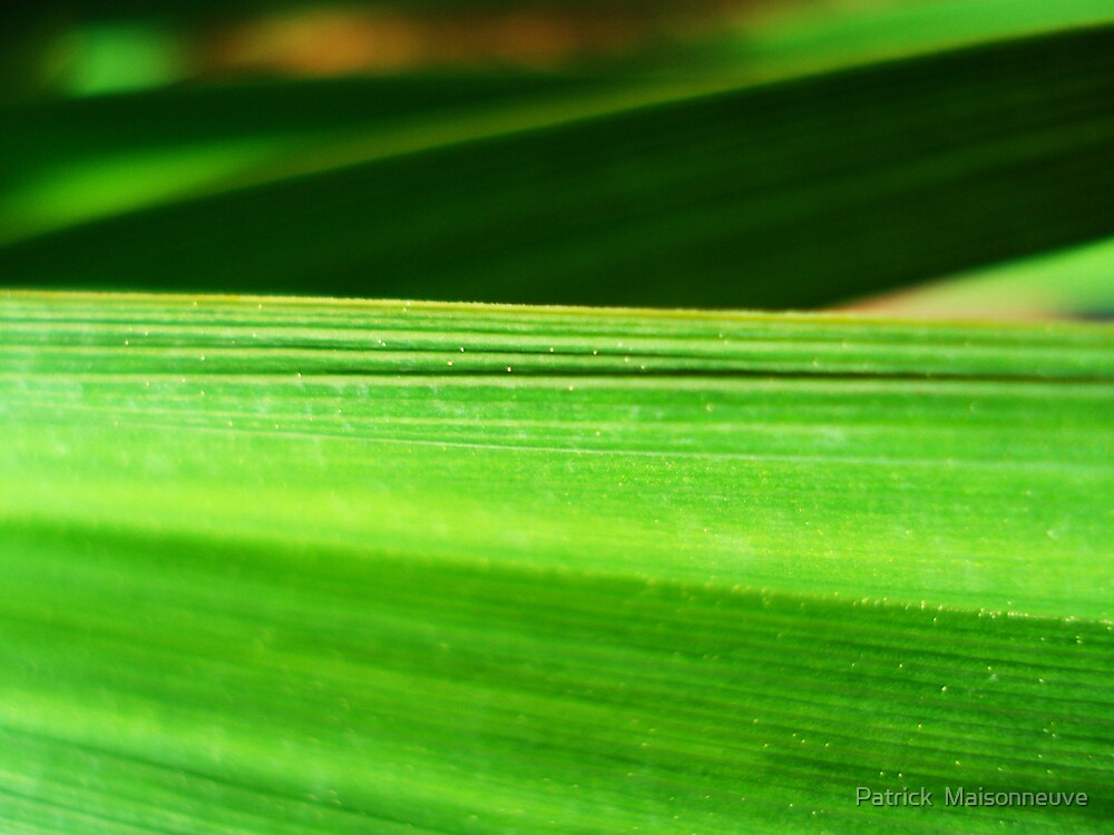 Green Leaf by Patrick  Maisonneuve