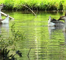 Chinese geese by sealander