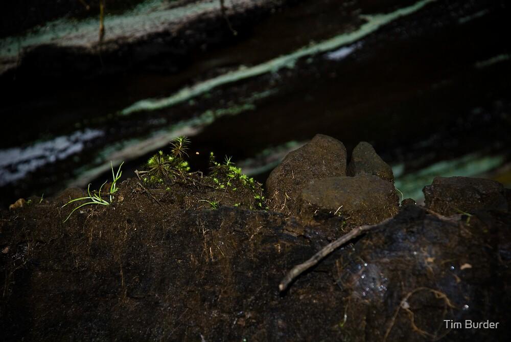 Underbridge Moss Garden by Tim Burder