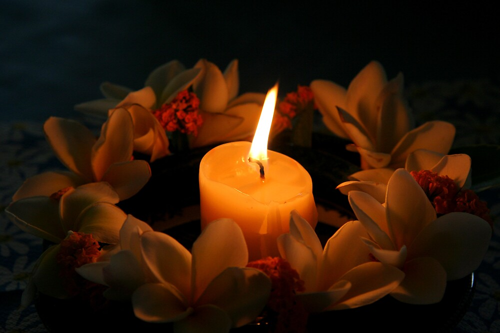 Candle surrounded by frangipanis by Martin Pot
