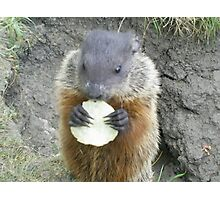 cutey groundhog Photographic Print