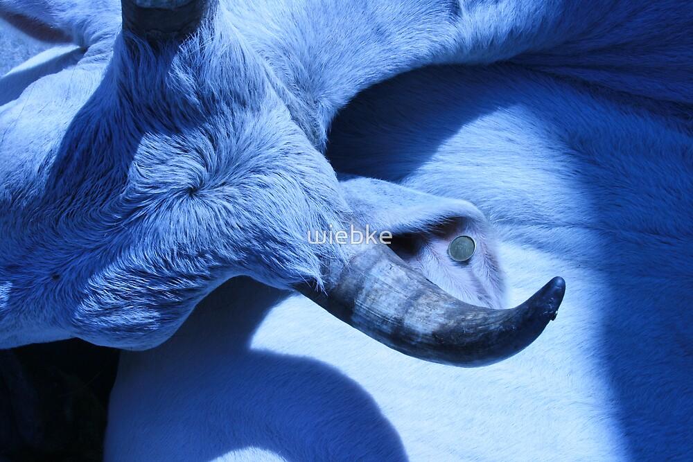 Sacred Cow by wiebke