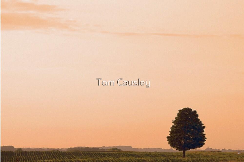 Sundown by Tom Causley