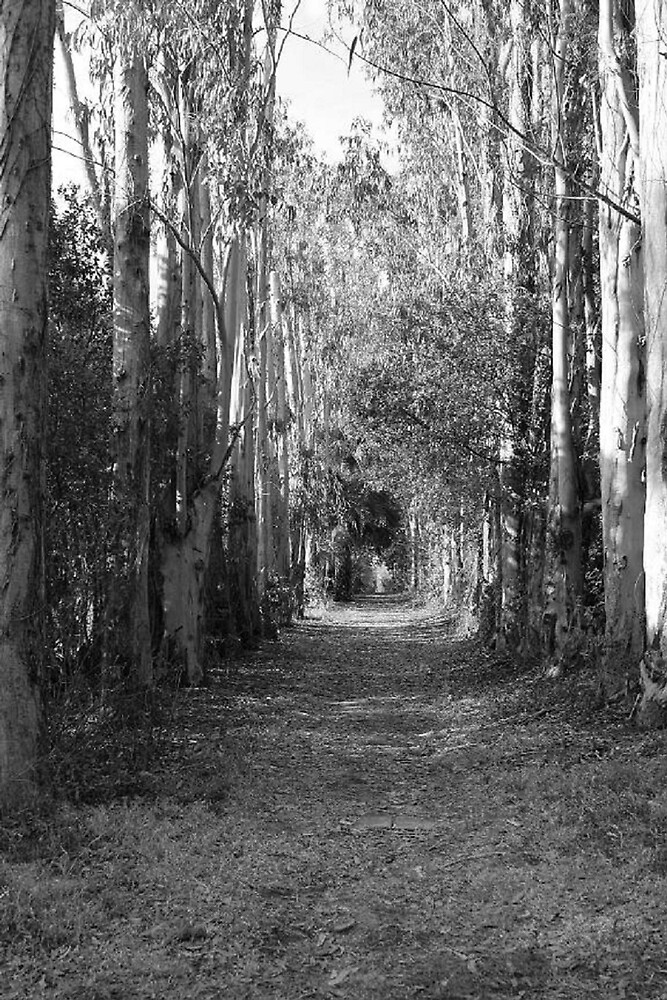 The Beaten Path by photophreak