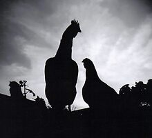 Chickens at dusk by cass71898