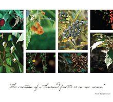 Berries 1 by Hazel Wallace