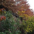 Autumn Colors, Brunswick Community Garden, Harsimus Branch Embankment, Jersey City, New Jersey by lenspiro