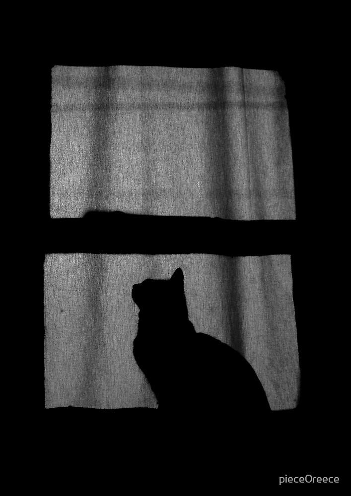 misty in the window by piece0reece