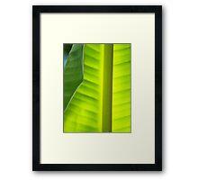 Light through the Leaf Framed Print