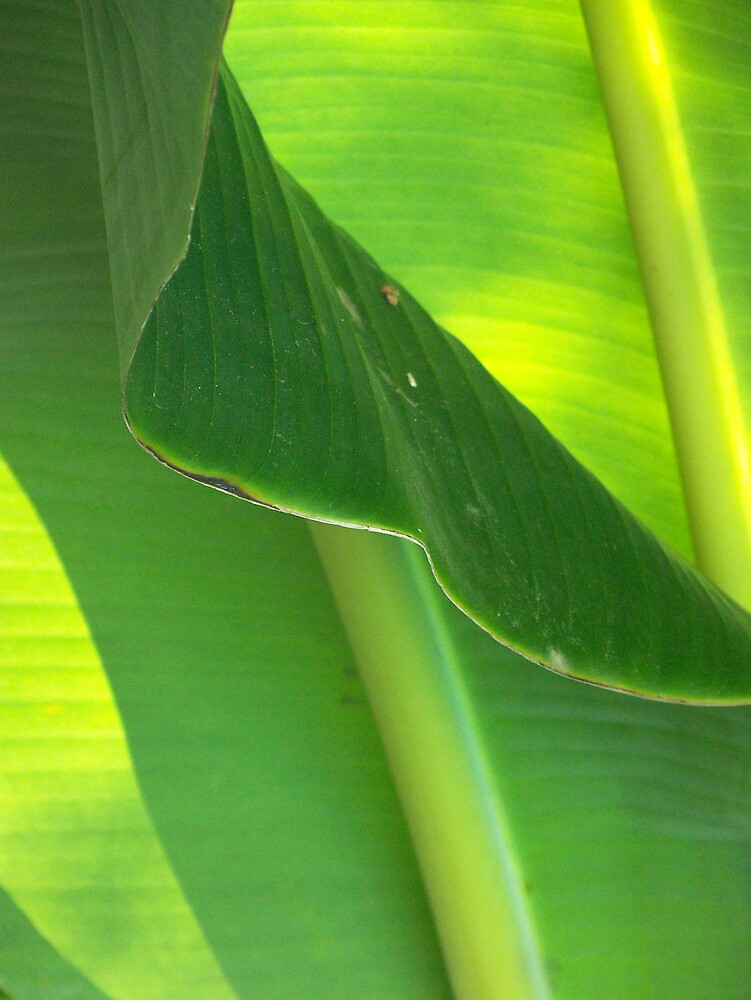 Two Banana Leaves by skurm002