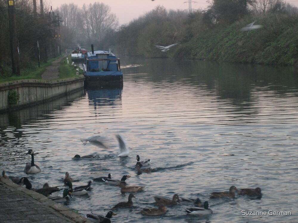 flock - hertfordshire by Suzanne German