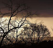 Ferntree Gully Landscapes by webgrrl