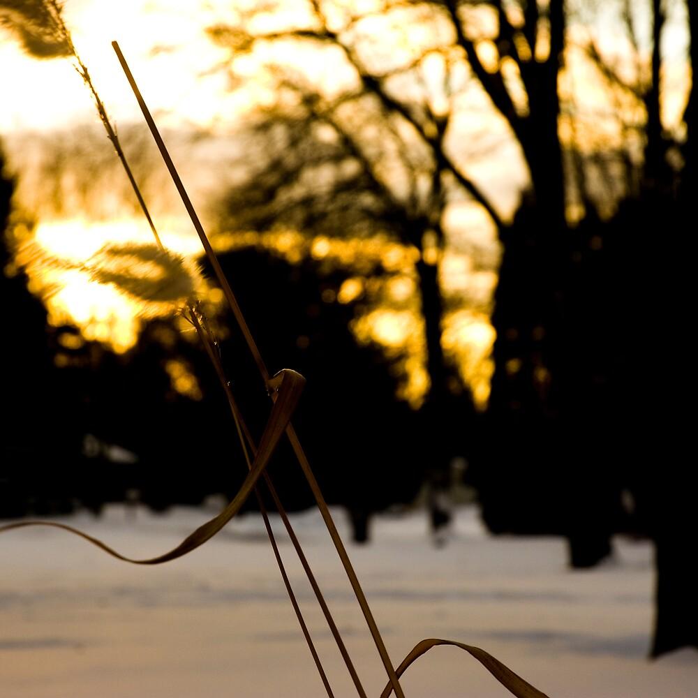 Sunset by Lara Grauer
