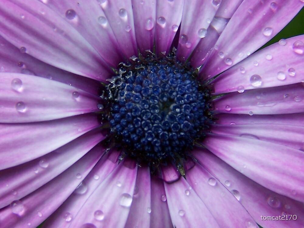 wet flower by tomcat2170