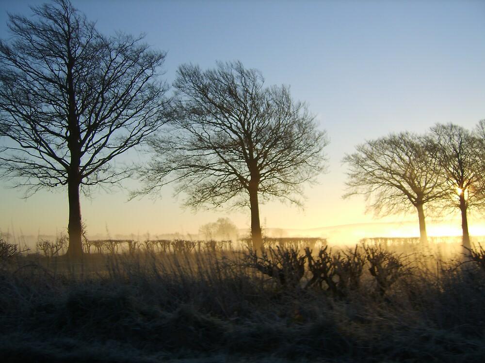 Winter scene..a misty morning in the U.K. by frozencalla