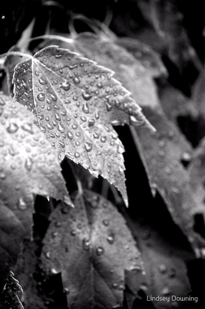 Rain Shower II by Lindsey Downing