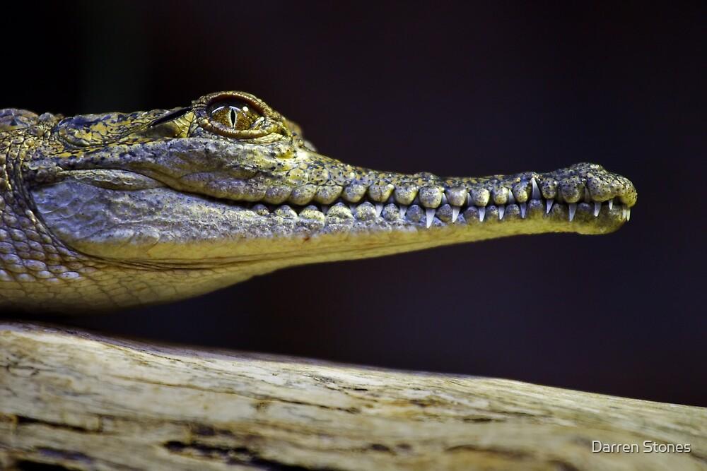 Crocodile by Darren Stones