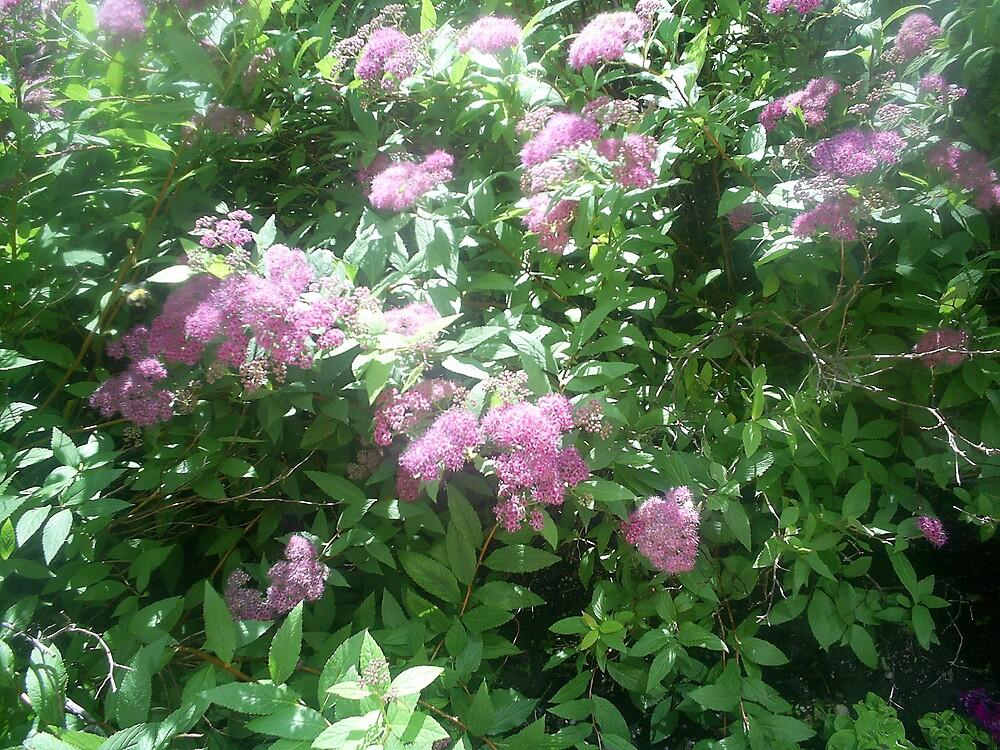 pink flowers on tree by oilersfan11