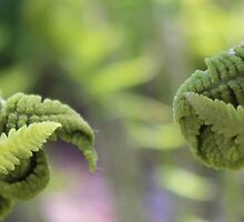 Peek a boo ferns by Lori Taylor