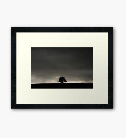 Solo Tree #4 Framed Print