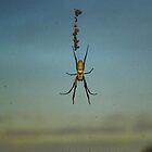 Huge spider by Rosy