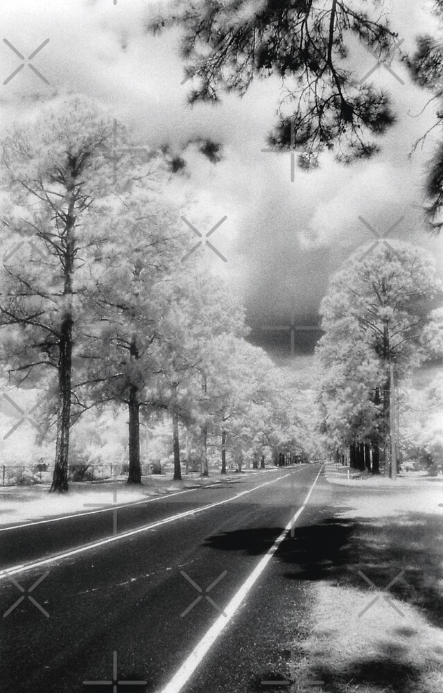 Road to nowhere by Terry Williams