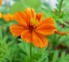 small bright orange flower by tomcat2170