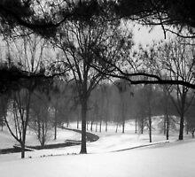 Freshly Fallen Snow by pr1konnect