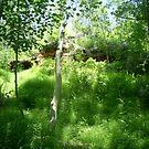 very green forest by oilersfan11