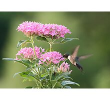 Hummingbird and Blooms Photographic Print