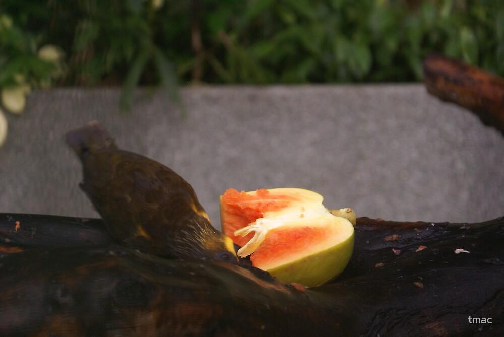 Singapore - Sentosa Bird Eating Fruit 2 by tmac